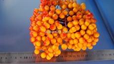 Ягода оранжевая на проволоке