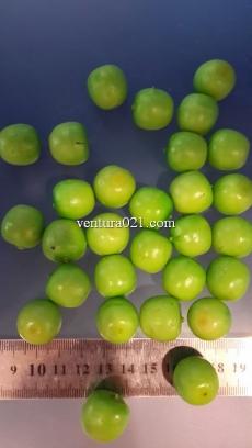 """Декоративные фрукты маленькие """"Яблоко зелёное"""""""