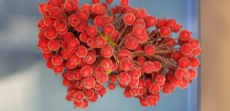 Ягода красная сахарная  на проволоке